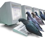 SEO advice tips Google-pigeon-ranking-algorithm